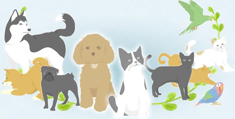 ペット葬儀の対象